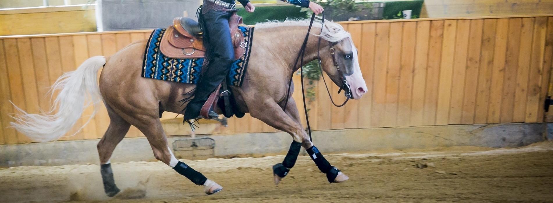 1900x700 Leonie Mager_nur Pferd